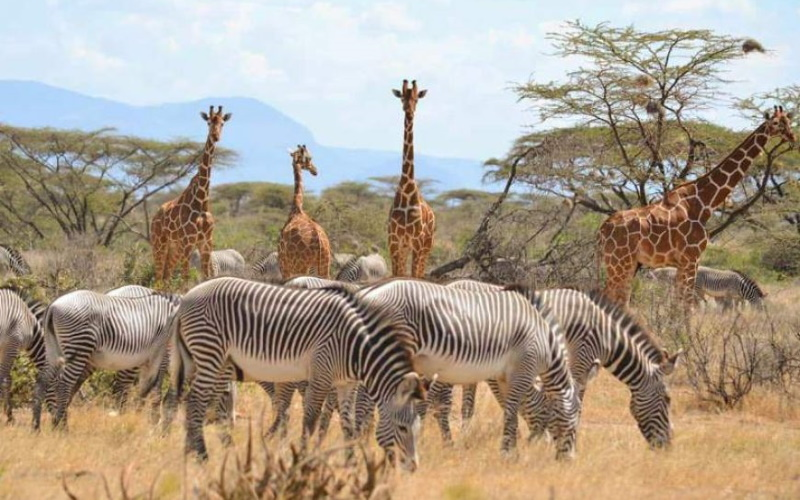 3 days 2 nights Samburu Game Reserve